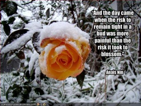 """And the day came when the risk to remain tight in a bud was more painful than the risk it took to blossom."" -Anaïs Nin"